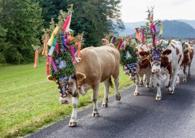 Salzburger Land: Abtenau
