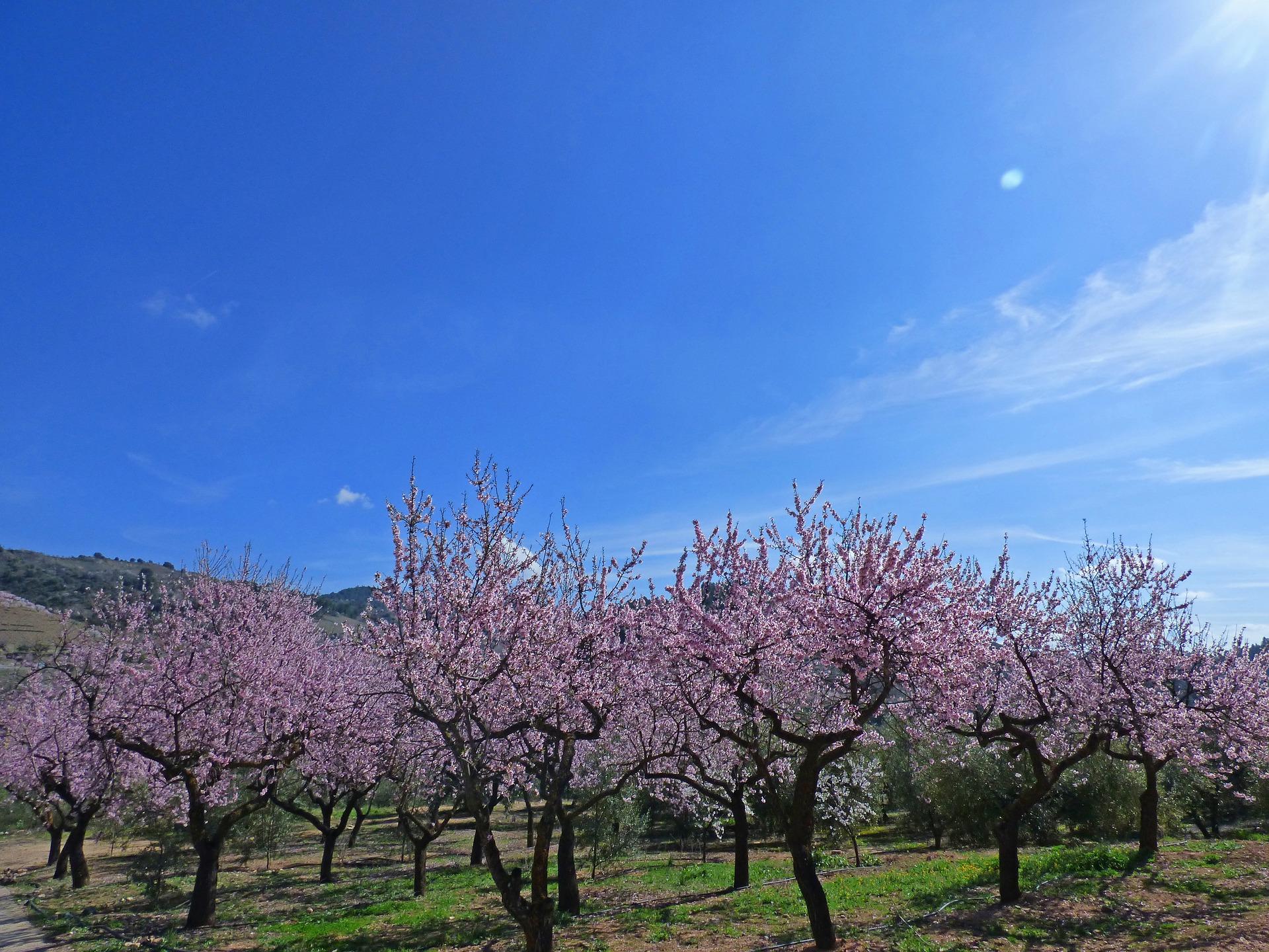 almond-grove-2102393_1920