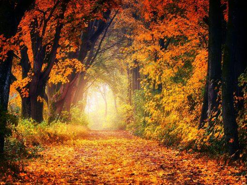 Goldene Herbsttage im Bayerischen Wald