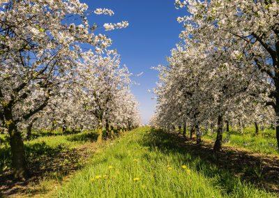 Frühlingsgefühl im Alten Land