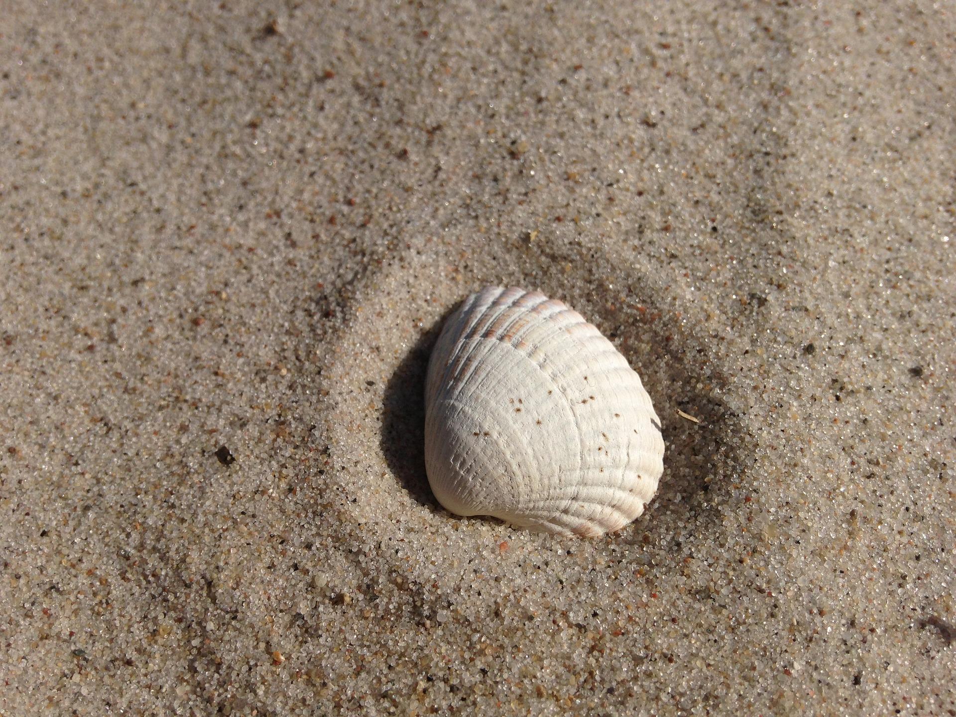 shell-812254_1920