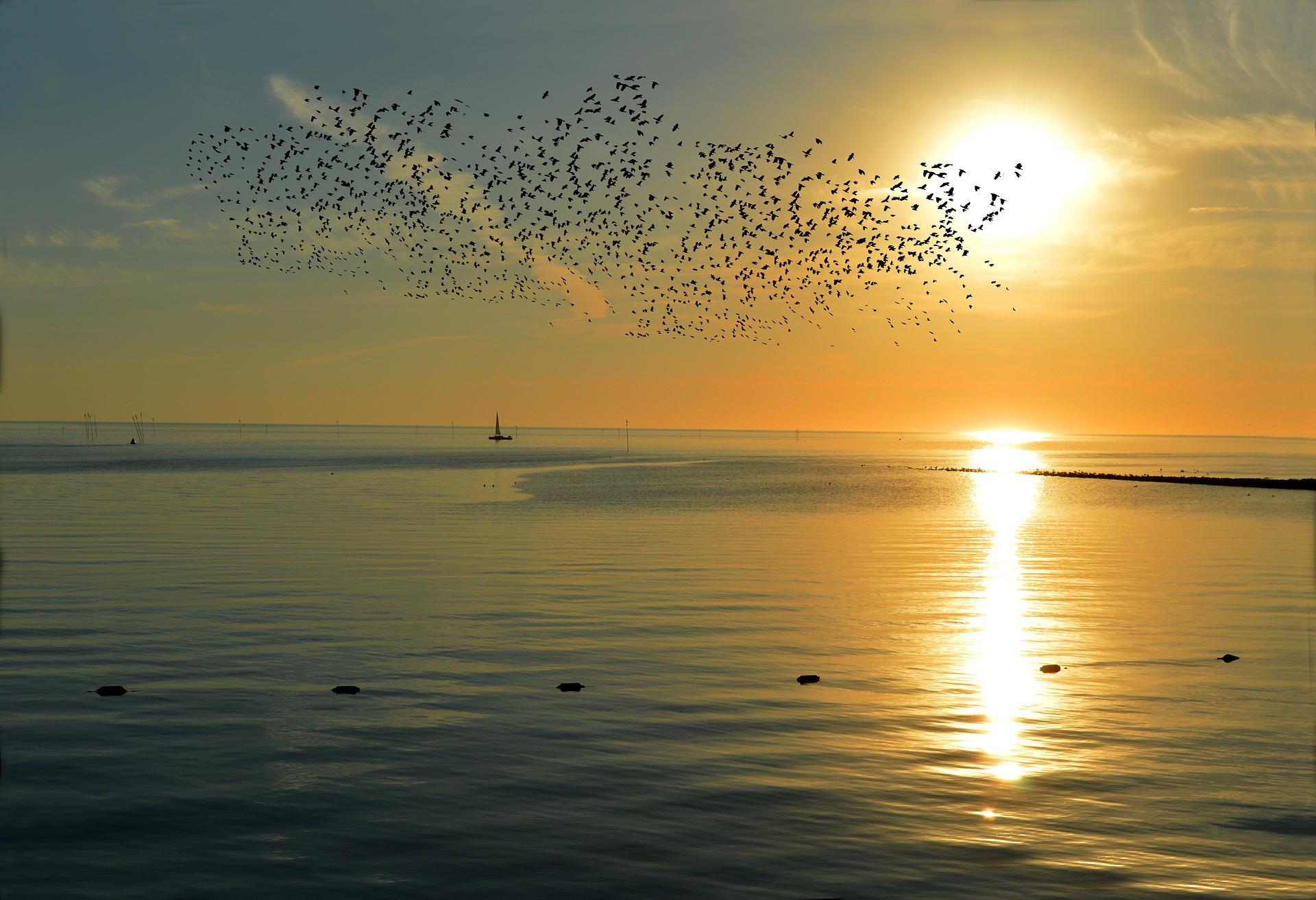 sunset-4649780_1920